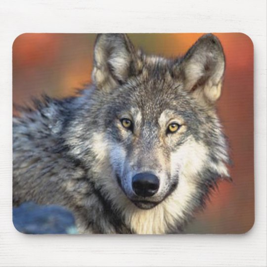 Wolf Photograph Mouse Pad
