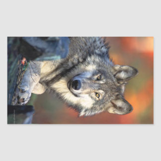 Wolf Photograph Rectangular Sticker