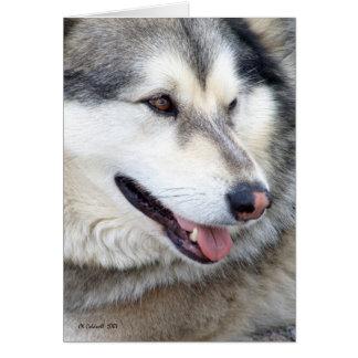 Wolf Portrait Card