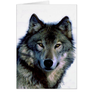 Wolf Portrait Card