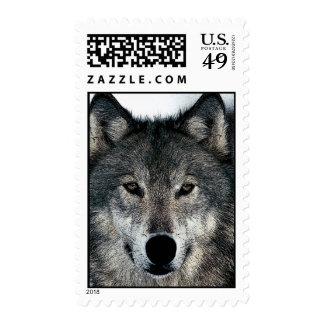 Wolf Portrait Postage Postage Stamps
