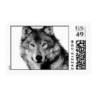 Wolf Portrait Postage
