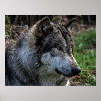 WOLF PORTRAIT PRINT