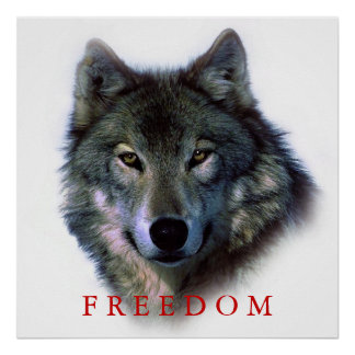 Wolf Portrait Square Freedom Poster Print