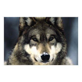 Wolf Portrait Stationery