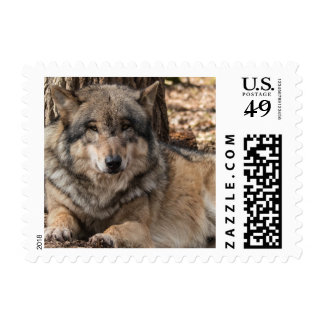 Wolf Postage Stamps