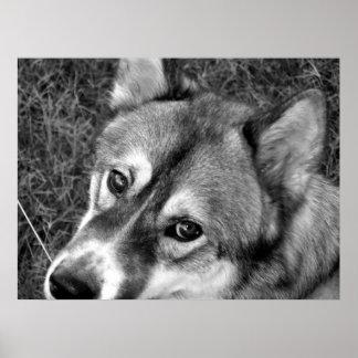 Wolf Poster (black & white)
