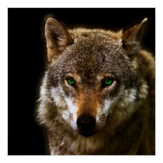 Wolf Profile with green eyes ~ editable background Poster