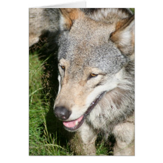 Wolf Prowl Greeting Card