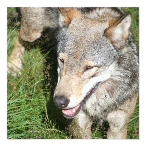 """Wolf Prowl Invitations 5.25"""" Square Invitation Card"""