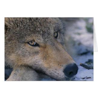 Wolf_pup_closeup Greeting Card