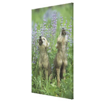 Wolf Puppies Howling In Meadow Canvas Print