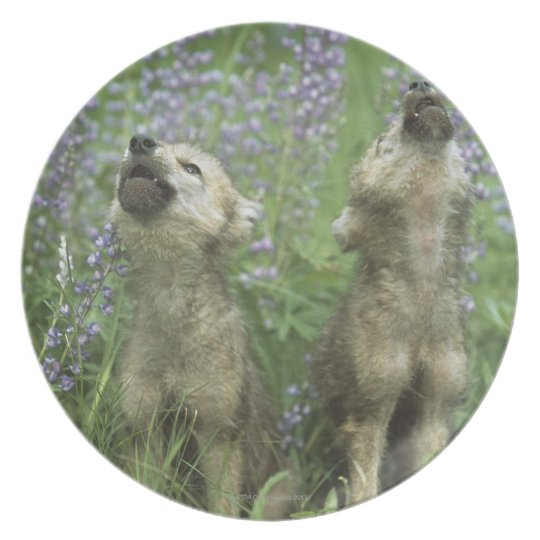 Wolf Puppies Howling In Meadow Melamine Plate