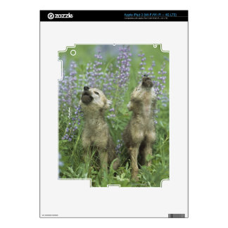 Wolf Puppies Howling In Meadow iPad 3 Skin