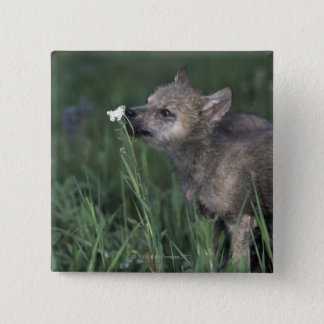 Wolf Puppy Sniffing Mountain Wildflower Button