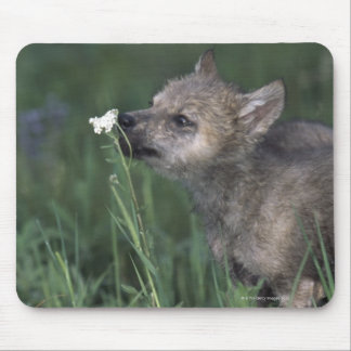 Wolf Puppy Sniffing Mountain Wildflower Mouse Pad