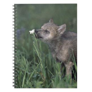 Wolf Puppy Sniffing Mountain Wildflower Spiral Notebook
