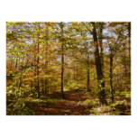 Wolf Rocks Trail in Autumn Pennsylvania Landscape Poster