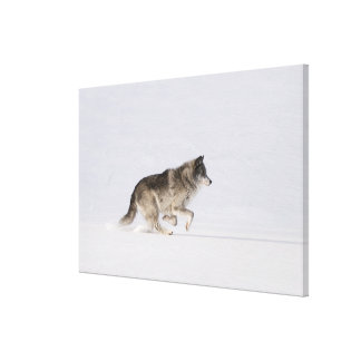 Wolf running in the snow 2 canvas print
