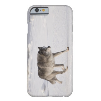 Wolf running in the snow barely there iPhone 6 case