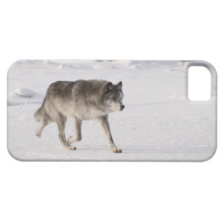 Wolf running in the snow iPhone SE/5/5s case