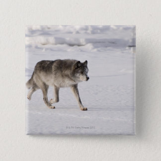 Wolf running in the snow pinback button