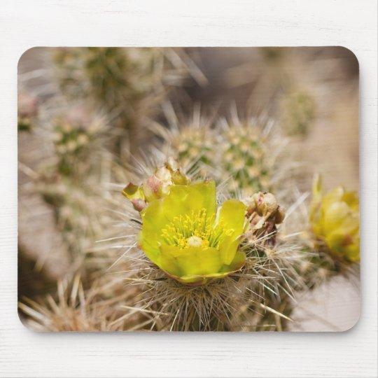 Wolf's cholla Cactus Mouse Pad