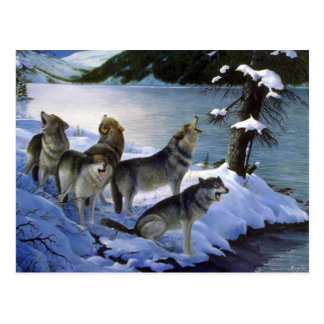 Wolf song, Wolves Postcard