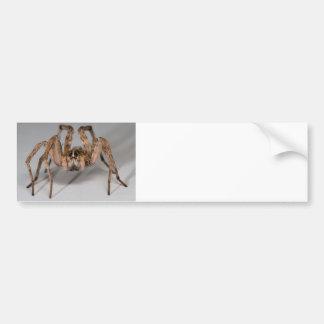 Wolf Spider Bumper Sticker