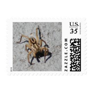 Wolf Spider Postage Stamps