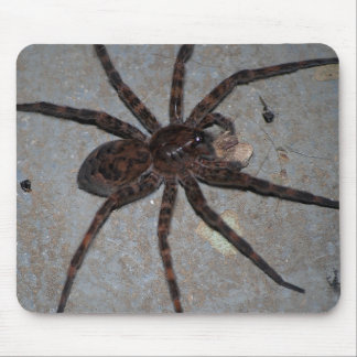 Wolf spider with snack mouse pad