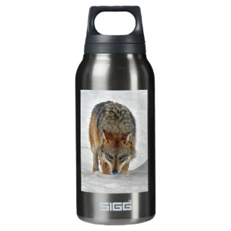 Wolf Stalking Insulated Water Bottle