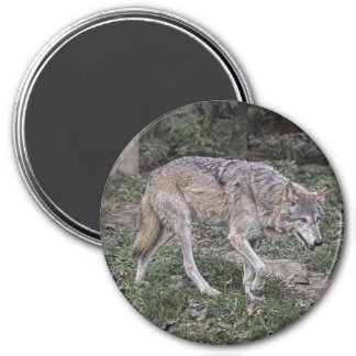 Wolf Tracking 3 Inch Round Magnet