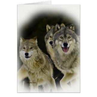 Wolf Trio Card