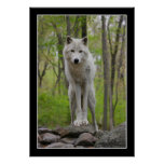 Wolf Watch Poster