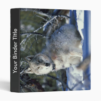 Wolf watches biologists in Yellowstone National Pa 3 Ring Binder