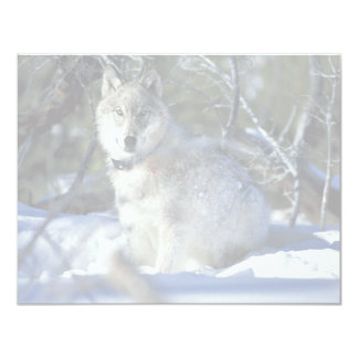 Wolf watches biologists in Yellowstone National Pa 4.25x5.5 Paper Invitation Card