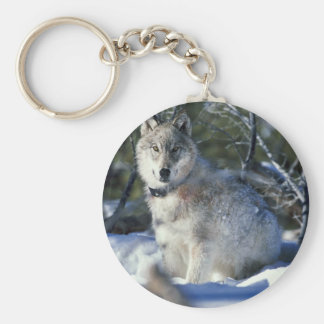 Wolf watches biologists in Yellowstone National Pa Key Chain