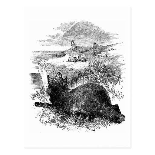 Wolf Watching Bunnies Postcard