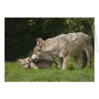 Wolf with Pup Greeting Card