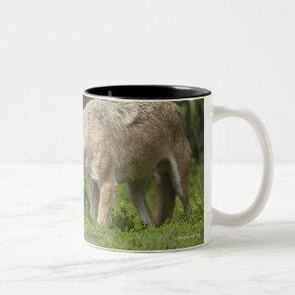 Wolf with Pup Coffee Mug