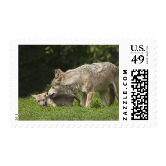 Wolf with Pup Postage