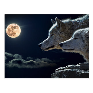 Wolf Wolves Howling at the Full Moon at Night Postcard
