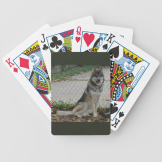 Wolfdog age 10 months bicycle playing cards