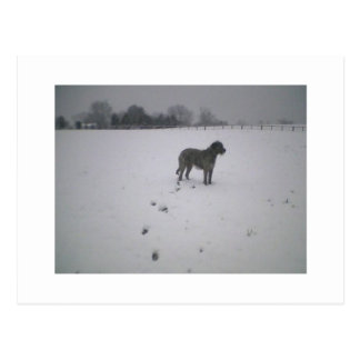 Wolfhound in snow cards post card
