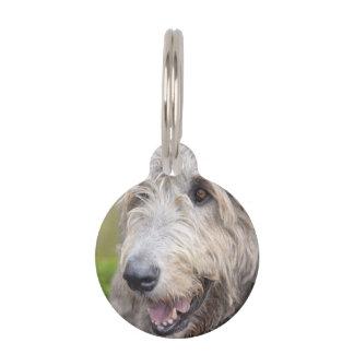 Wolfhound irlandés adorable placas de mascota