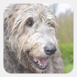 Wolfhound irlandés lindo pegatinas cuadradases personalizadas