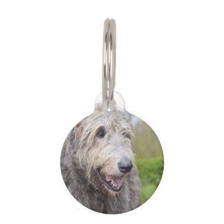 Wolfhound irlandés lindo placa de mascota