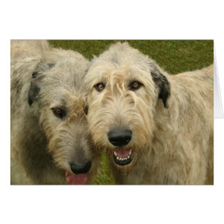 Wolfhounds irlandeses tarjeta