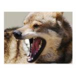Wolf's Fangs Postcard